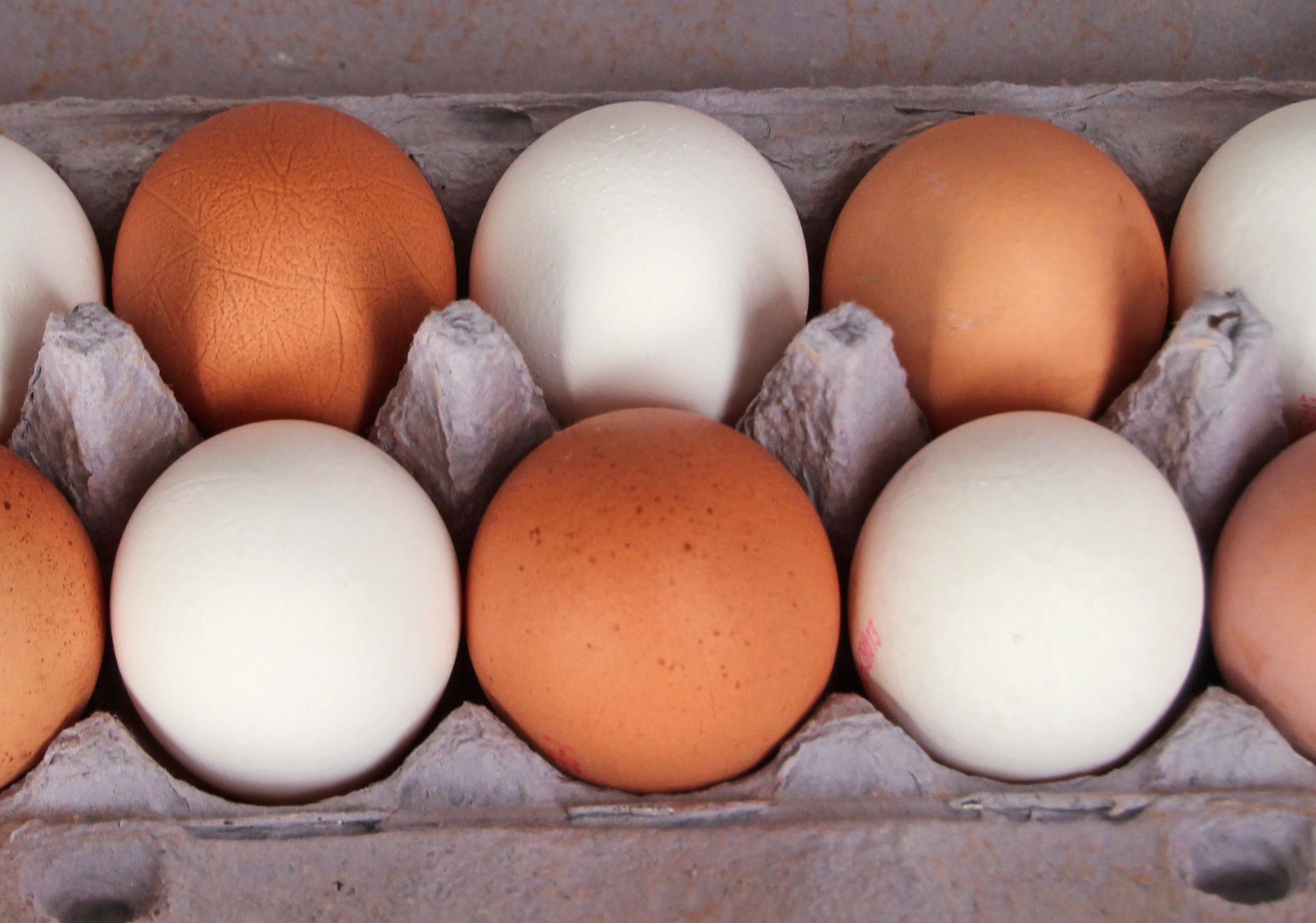 Landwirtschaftspolitik: Eier-Subventionen